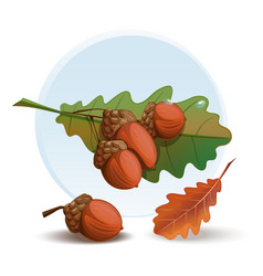 Oak branch with acorns and leaves vector