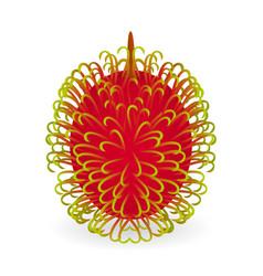 Rambutan isolated vector