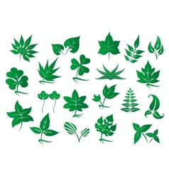 Green leaves and plants set vector image vector image