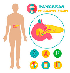 Infographic poster with pancreas and human body vector