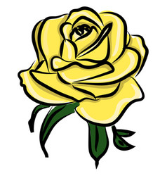 yellow rose on white background vector image