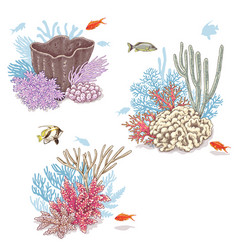 Corals and swimming fishes vector