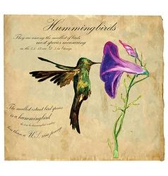 Hand painted Bird Hummingbird vector image