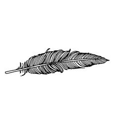 feather of bird doodle hand drawn vector image