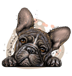 french bulldog sticker on wall vector image