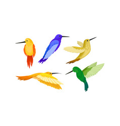 Set of small colorful hummingbirds flying vector