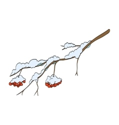 Winter rowan branch vector image
