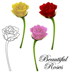 beautiful roses vector image