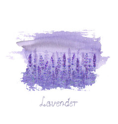 lavender field pattern on purple stain isolated on vector image