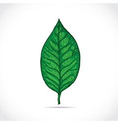Magnolia leaf vector