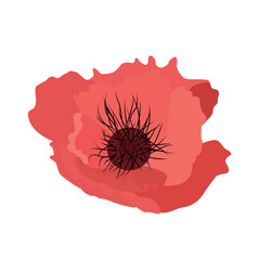 simple flower poppy vector image