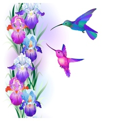 Seamless pattern with Iris flowers and hummingbird vector image