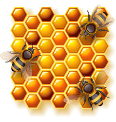 bees and honey vector image