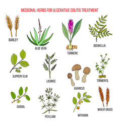 Best medicinal herbs to treat ulcerative colitis vector