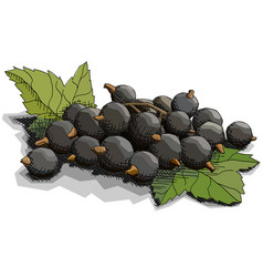Drawing currant berries vector