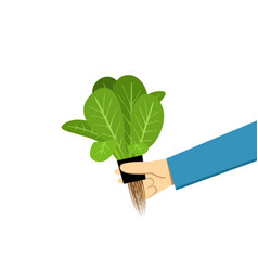 farmer show hydroponics vegetable on white vector image