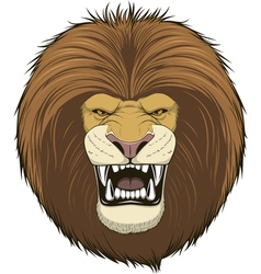 Ferocious lion head vector