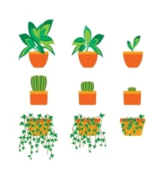 Green Plants in Pot for Home or Office vector image