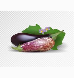 Photo-realistic fresh aubergine vector