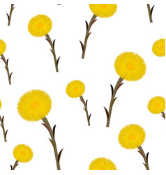 Seamless pattern coltsfoot flowers vector