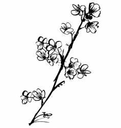 cherry blossom ink illustration vector image