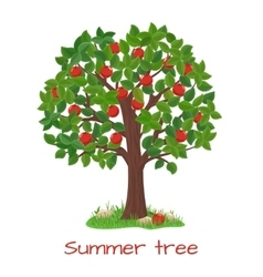 Green apple tree Summer tree vector image vector image