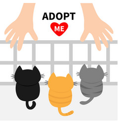 Adopt me three kittens looking up to human hand vector