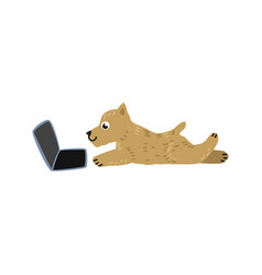 cartoon dog lying behind laptop vector image