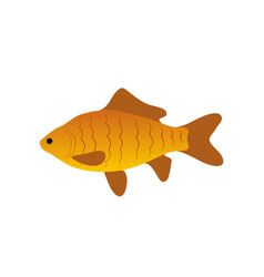 red zebra fish icon closeup vector image