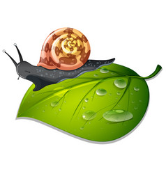 Snail crawling on green leaf vector