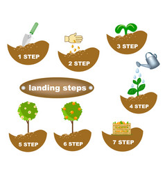description of planting steps vector image