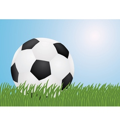 football in a grass vector image
