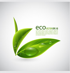 Realistic eco leaves vector