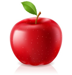 delicious red apple vector image vector image