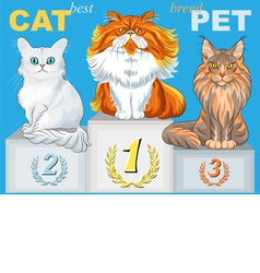 fluffy cat champion of different breeds on the pod vector image vector image