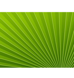 Green wallpapers palm tree vector image