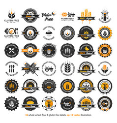 36 whole wheat flour and gluten free labels vector image