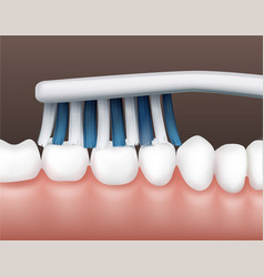 teeth with toothbrush vector image