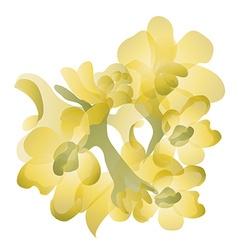 Jojoba flowers vector
