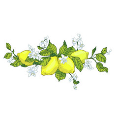 lemon tree in tattoo style image light little vector image