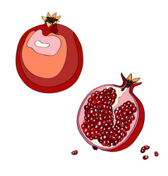 pomegranate cut garnet half vector image