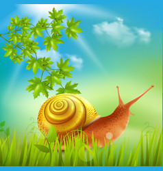 Snail in grass realistic vector