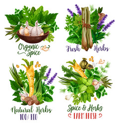 spices and herbs food condiments and seasonings vector image