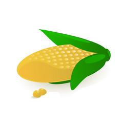 sweet corn vector image