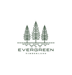 vintage retro hipster line art pine evergreen fir vector image