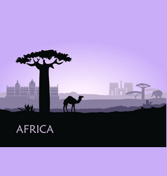 evening landscape with camels baobabs and vector image
