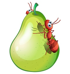 A pear with two ants vector