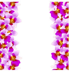 purple vanda miss joaquim orchid border vector image