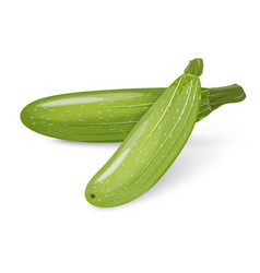 Two zucchini or squash vegetables isolated on a vector