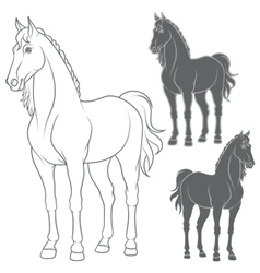 Set of with the horse vector image vector image
